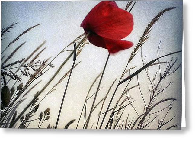 Greeting Cards - Poppy No II Greeting Card by Renata Vogl