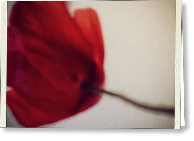 Greeting Cards - Poppy No.3 Greeting Card by Renata Vogl