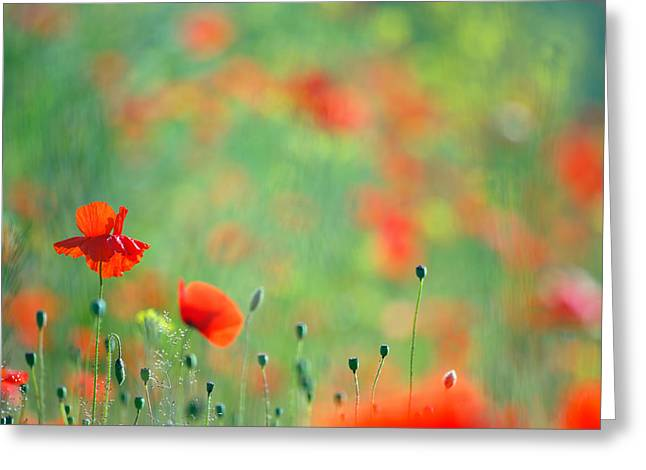 Poppy Decorations Greeting Cards - Poppy Party - Field of Corn Poppies Greeting Card by Roeselien Raimond