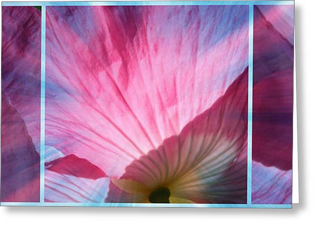 Floral Digital Art Greeting Cards - Poppy Rays Collage Greeting Card by Carol Groenen