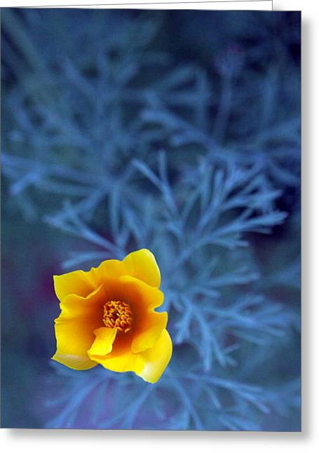 Flowers In California Greeting Cards - Poppy Greeting Card by Sarah Bergan