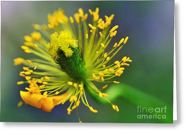 Green And Yellow Photographs Greeting Cards - Poppy Seed Capsule 2 Greeting Card by Kaye Menner