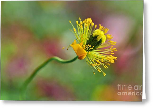 Green And Yellow Greeting Cards - Poppy Seed Capsule Greeting Card by Kaye Menner