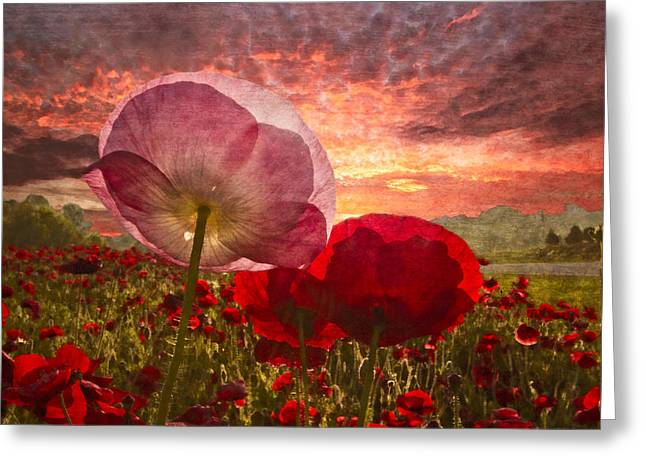 Tennessee Farm Greeting Cards - Poppy Sunrise Greeting Card by Debra and Dave Vanderlaan