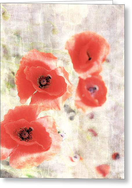 Poppy Three Greeting Card by JC Photography and Art