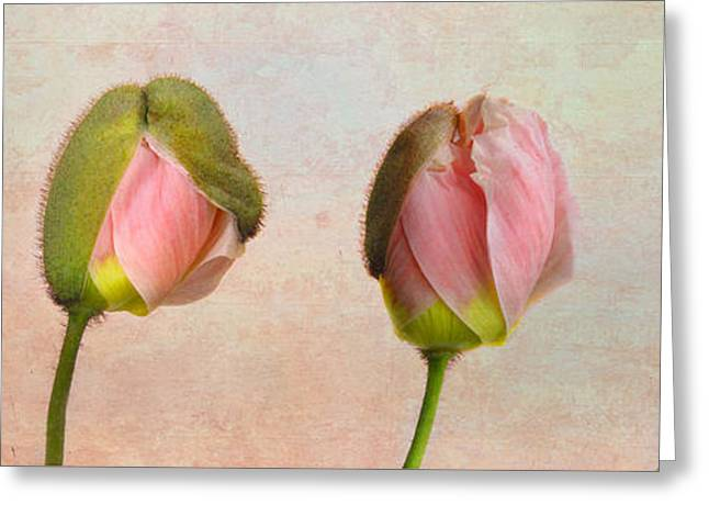 Converting Greeting Cards - Poppy Transformation Greeting Card by David and Carol Kelly