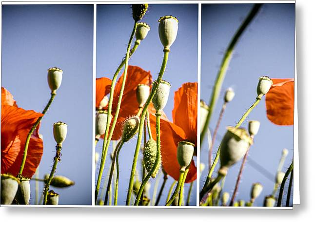 A Sunny Morning Greeting Cards - Poppy Triptych Greeting Card by Nomad Art And  Design
