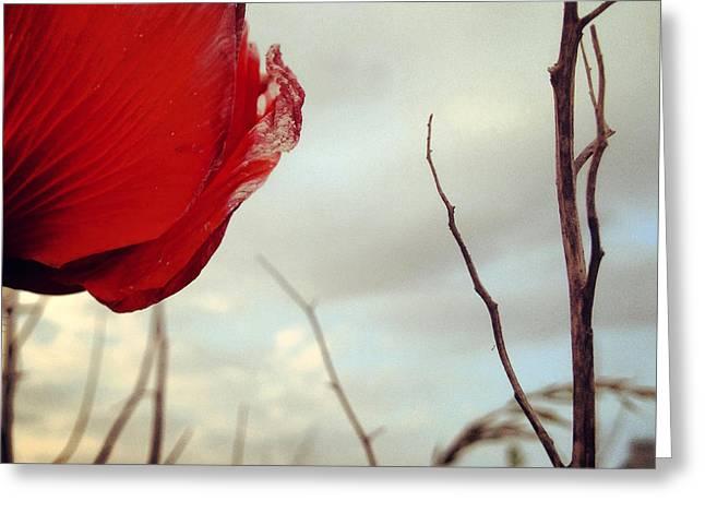 Poppy Photo Greeting Cards - poppy V Greeting Card by Renata Vogl