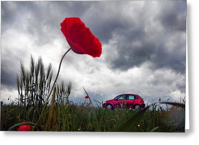 Greeting Cards - Poppy With Car Greeting Card by Renata Vogl