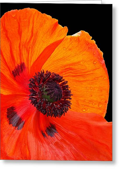 """battle Field"" Greeting Cards - Poppy With Raindrops 1 Greeting Card by Gill Billington"