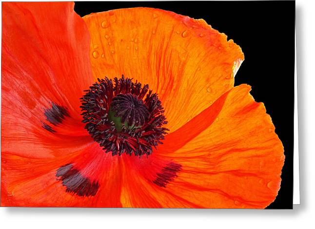 """battle Field"" Greeting Cards - Poppy With Raindrops 3 Greeting Card by Gill Billington"
