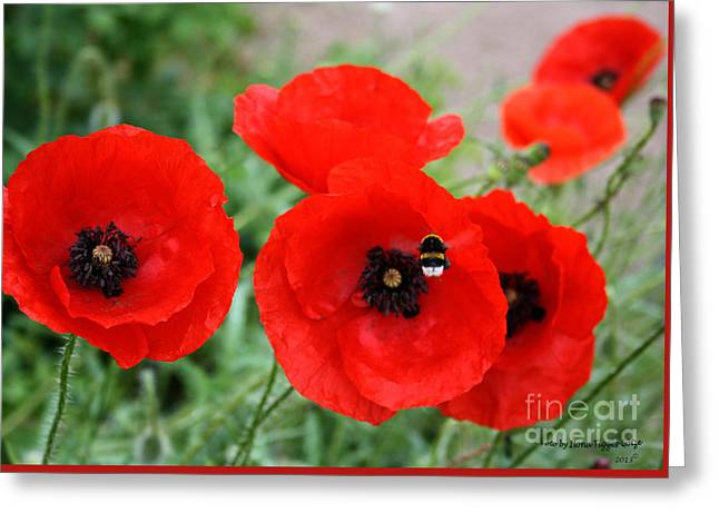 Shower Curtain Greeting Cards - Poppys Greeting Card by  ILONA ANITA TIGGES - GOETZE  ART and Photography