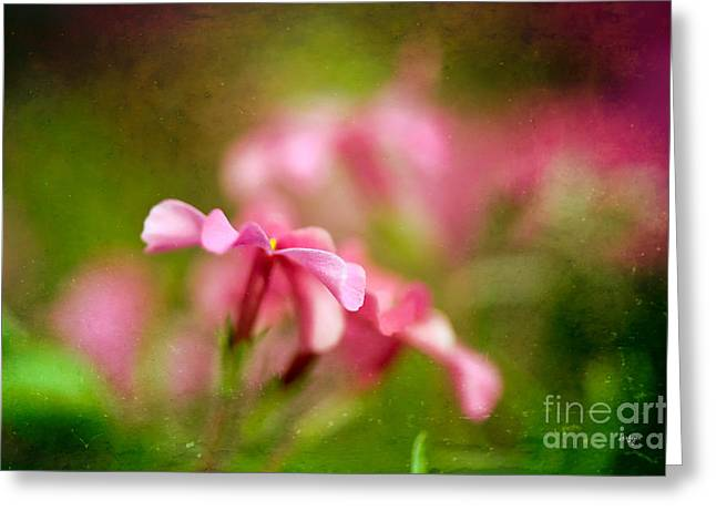 Ground Cover Greeting Cards - Popsicle Pink Greeting Card by Lois Bryan