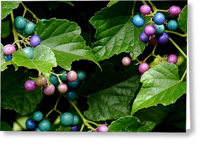 Porcelain Berries Greeting Card by Lisa Phillips