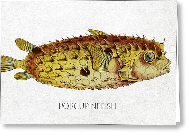 Aquarium Fish Digital Greeting Cards - Porcupinefish Greeting Card by Aged Pixel