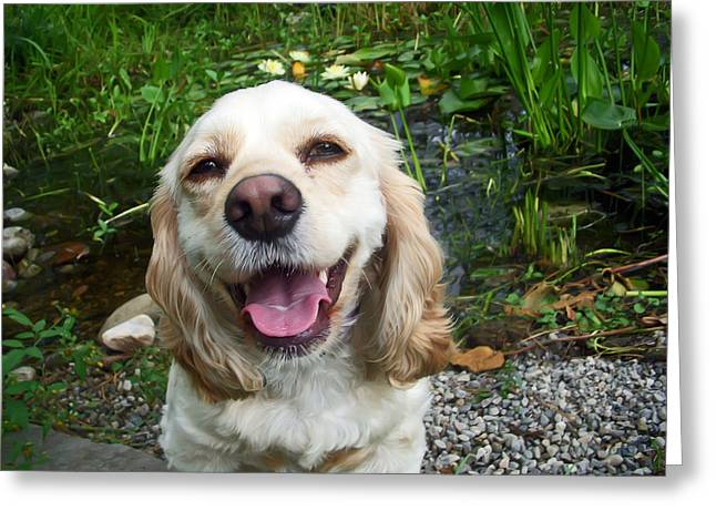 Spaniel Greeting Cards - Porshe Greeting Card by Aimee L Maher Photography and Art