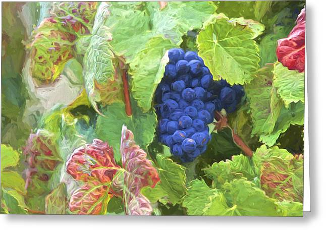 Winery Photography Greeting Cards - Port Wine Grapes Greeting Card by David Letts
