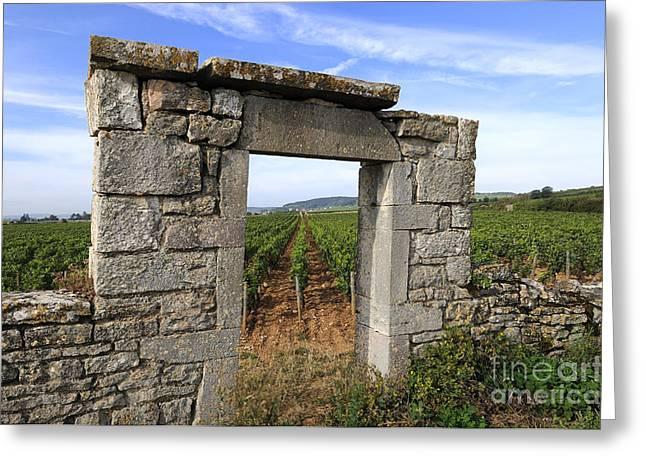 Viticulture Greeting Cards - Portal of vineyard in Burgundy near Beaune. Cote dOr. France. Europe Greeting Card by Bernard Jaubert