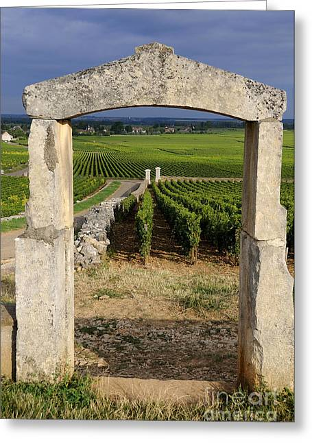 Vineyard Photographs Greeting Cards - Portal  of vineyard.Burgundy. France Greeting Card by Bernard Jaubert