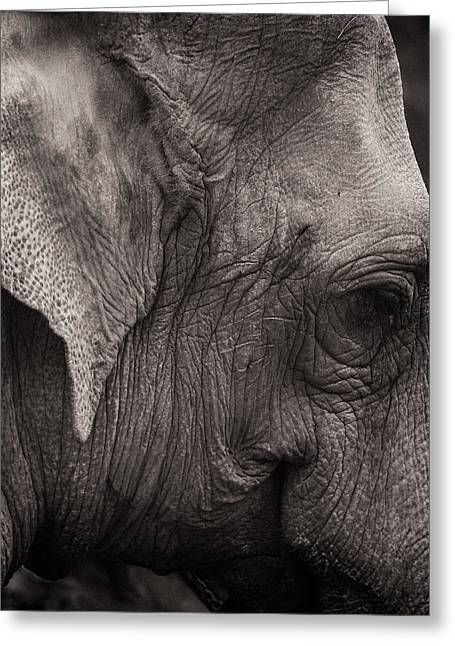 Elephants Eye Greeting Cards - Portrait in Leather Greeting Card by Joseph Smith