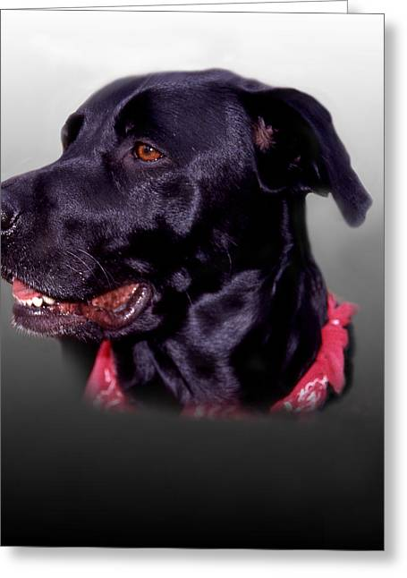 Pictures Of Dogs Greeting Cards - Portrait Of A Black Lab Greeting Card by Skip Willits