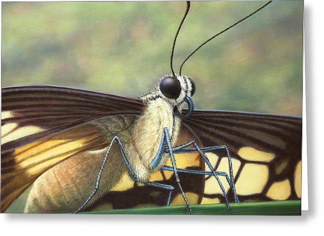 Animals Drawings Greeting Cards - Portrait of a Butterfly Greeting Card by James W Johnson