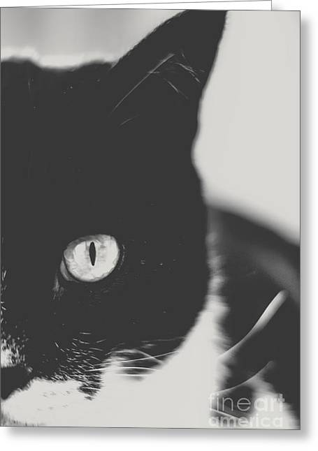 Cat Photo Greeting Cards - Portrait of a Cat in Black and White Greeting Card by Emily Enz