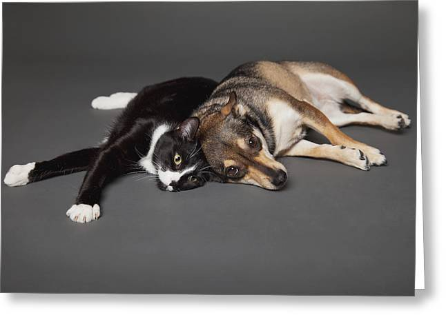 Gray Hair Greeting Cards - Portrait Of A Dog And Cat Laying Greeting Card by Leah Bignell