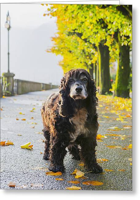 Best Friend Greeting Cards - Portrait Of A Dog Standing On A Wet Greeting Card by Mats Silvan