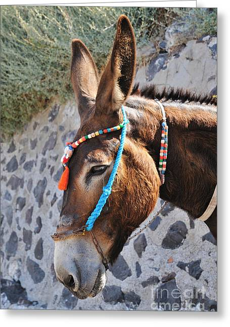 Town Greeting Cards - Portrait of a donkey Greeting Card by George Atsametakis