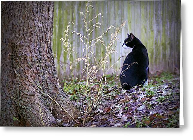 Best Sellers -  - Surveying Greeting Cards - Portrait Of A Feline Greeting Card by Brian Wallace