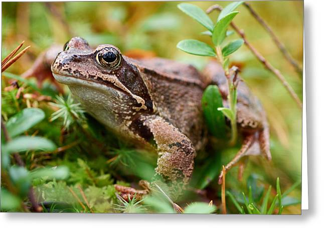 Portrait Of A Frog Greeting Card by Jouko Lehto