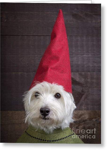 Westie Cards Greeting Cards - Portrait of a garden gnome Greeting Card by Edward Fielding