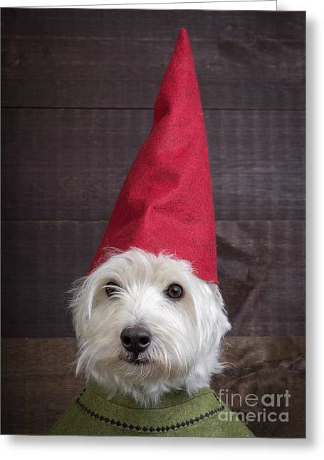 Portrait Of A Garden Gnome Greeting Card by Edward Fielding
