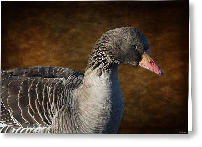 Orange Beak Greeting Cards - Portrait of a Goose II Greeting Card by Mary Machare