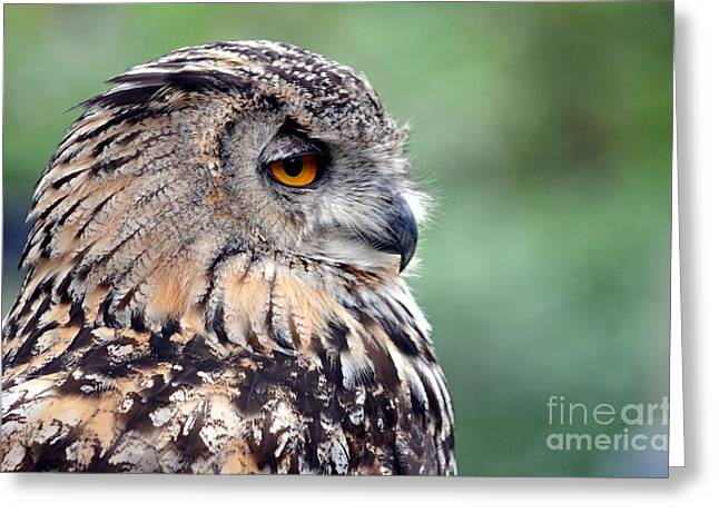 Jim Fitzpatrick Greeting Cards - Portrait of a Great Horned Owl Greeting Card by Jim Fitzpatrick