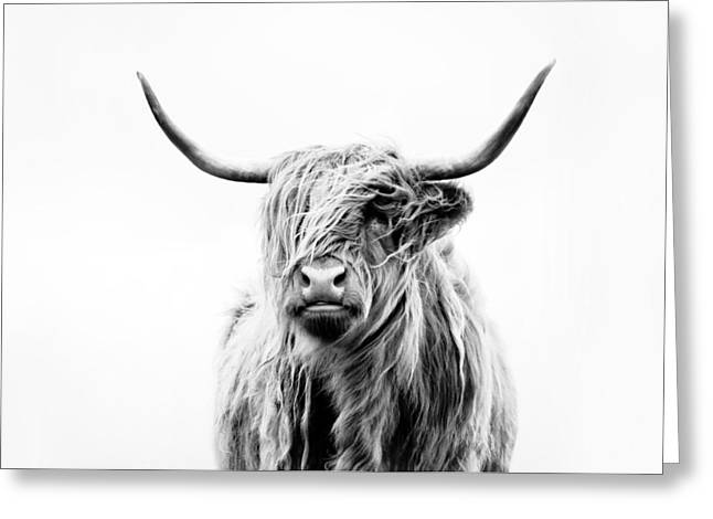 Recently Sold -  - Steer Greeting Cards - Portrait Of A Highland Cow Greeting Card by Dorit Fuhg