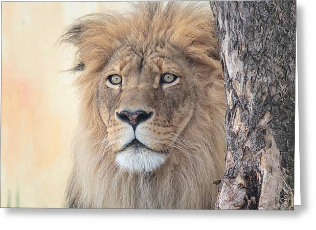 Lions Photographs Greeting Cards - Portrait of a Lion Greeting Card by Everet Regal