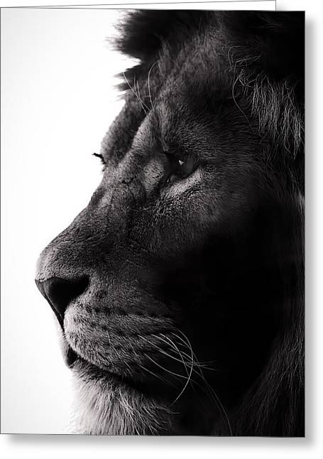 Lions Greeting Cards - Portrait Of a Lion Greeting Card by Martin Newman