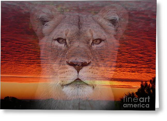 Reflections Of Sun In Water Greeting Cards - Portrait of a Lioness at the End of a Day Greeting Card by Jim Fitzpatrick