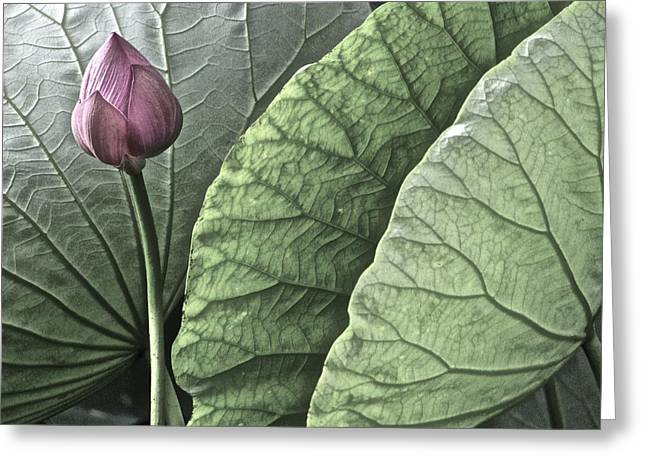 Lotus Full Bloom Greeting Cards - Portrait of a Lotus - 2 Greeting Card by Larry Knipfing