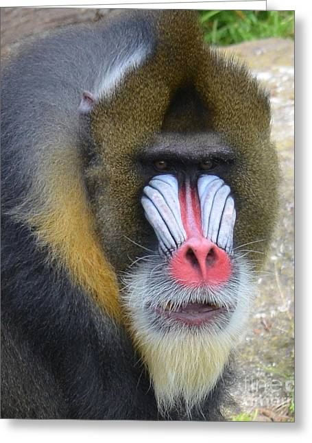 Jim Fitzpatrick Greeting Cards - Portrait of a Mandrill Greeting Card by Jim Fitzpatrick