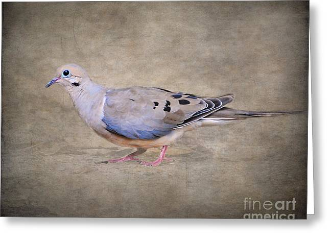 Mourning Dove Greeting Cards - Portrait of a Mourning Dove Greeting Card by Jai Johnson