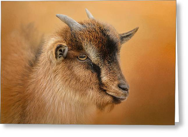 Goat Photographs Greeting Cards - Portrait Of A Nubian Dwarf Goat Greeting Card by Jai Johnson