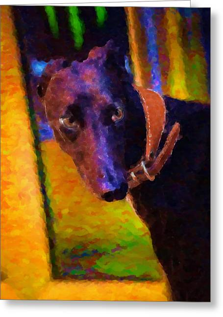 Collar Digital Art Greeting Cards - Portrait of a Portuguese Dog 2 Greeting Card by Mary Machare