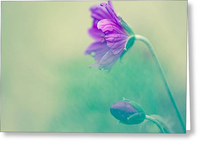 Nature Portrait Greeting Cards - Portrait Of A Purple Flower Greeting Card by Constance Fein Harding