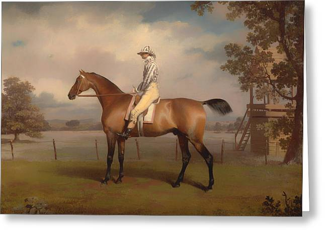 Race Horse Greeting Cards - Portrait of a Race Horse Greeting Card by George Garrard