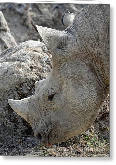 Rhinoceros Greeting Cards - Portrait of a Rhinoceros Greeting Card by Jim Fitzpatrick