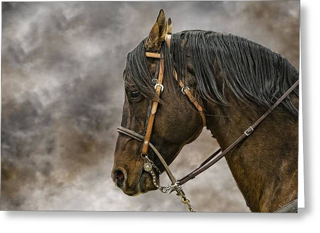 Portrait Of A Rope Horse Greeting Card by Jana Thompson