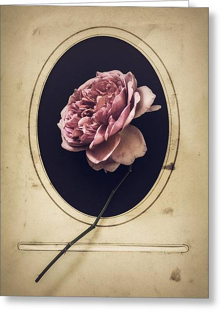 Portrait Of A Rose Greeting Card by Amy Weiss